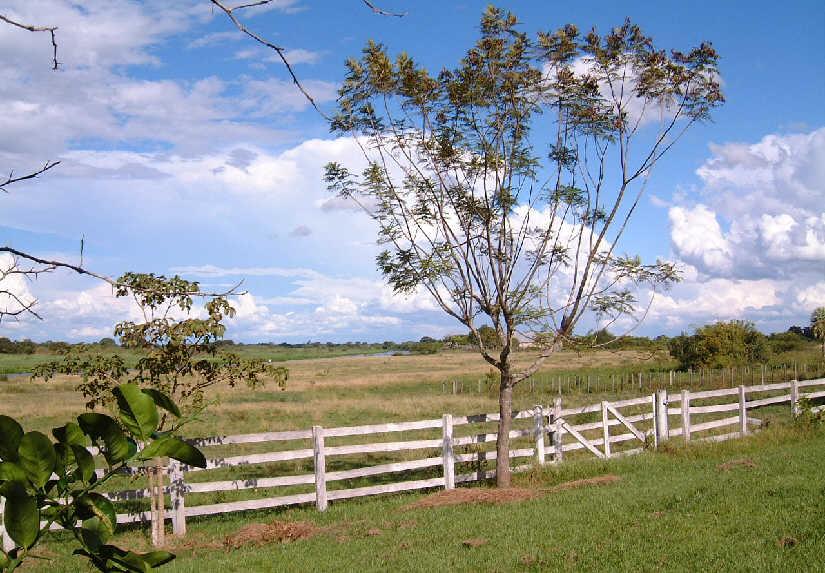 landscape campo bajo