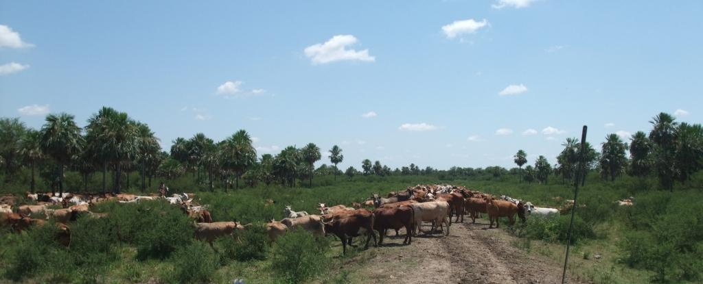 Bajo Chaco cattle ranch