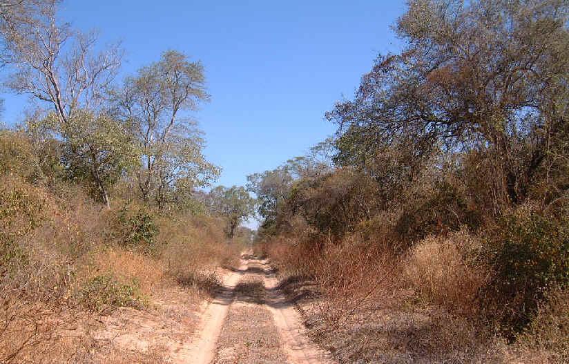 earth road / picada, Alto Paraguay, Chaco