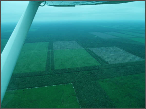 areal Paraguay deforestation