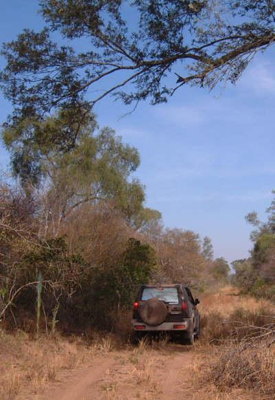 Paraguay Chaco Palmar de las Islas
